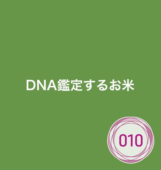 DNA鑑定するお米