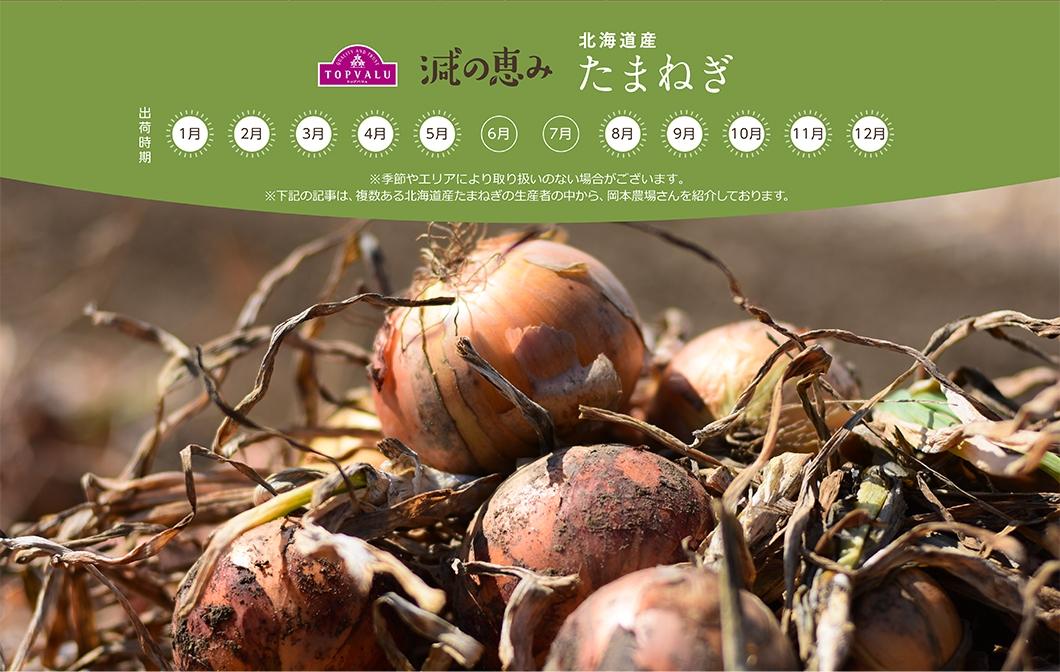 北海道産 たまねぎ ※季節やエリアにより取り扱いのない場合がございます。※下記の記事は、複数ある北海道産たまねぎの生産者の中から、岡本農場さんを紹介しております。