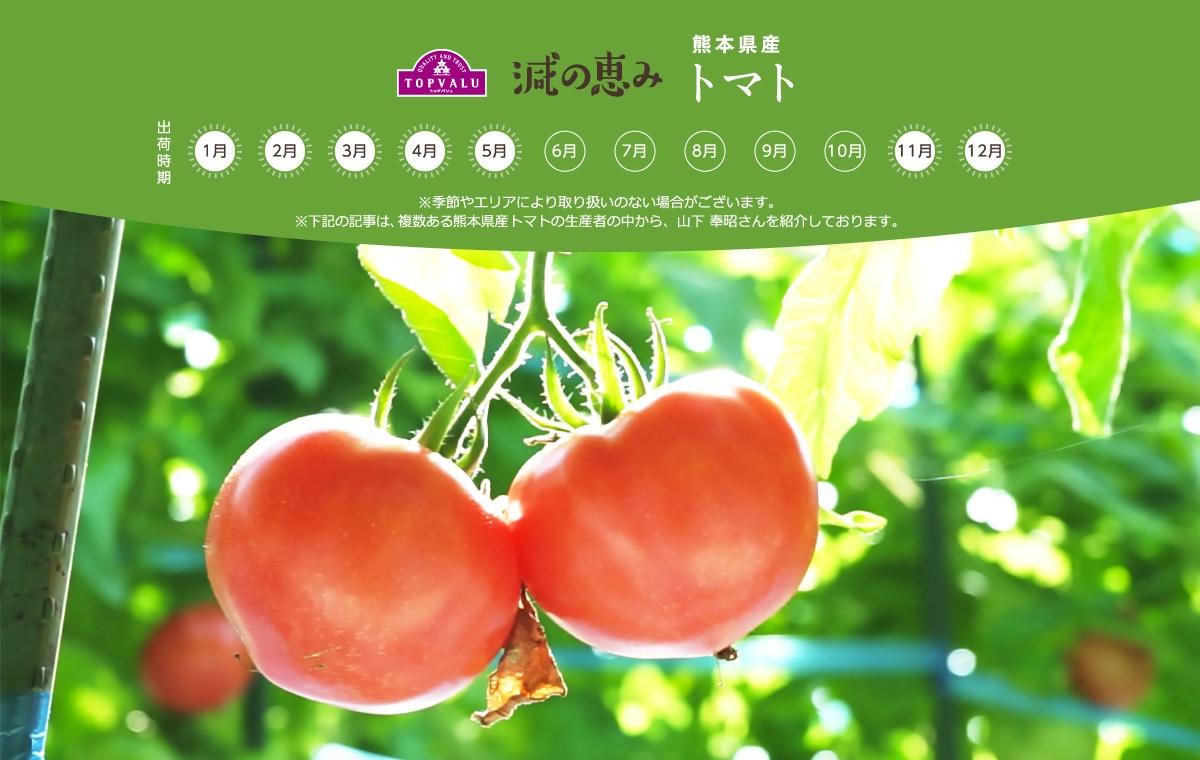 熊本県産 トマト ※季節やエリアにより取り扱いのない場合がございます。 ※下記の記事は、複数ある熊本県産トマトの生産者の中から、山下 奉昭さんを紹介しております。