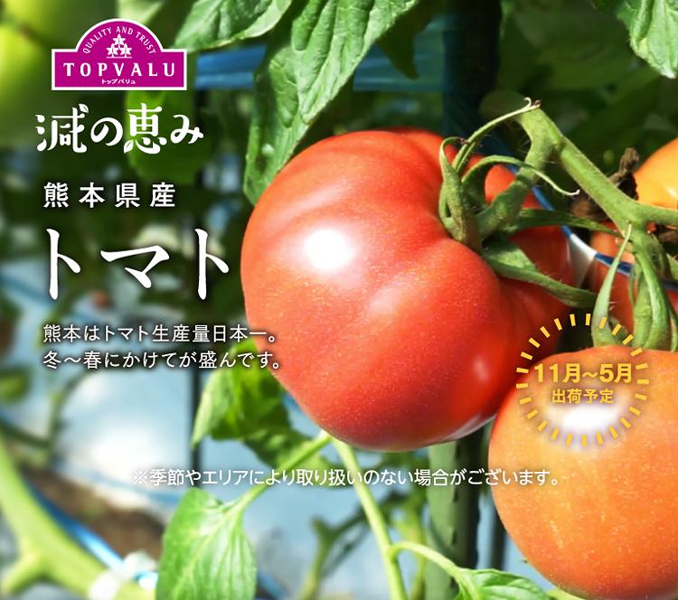 熊本県産 トマト