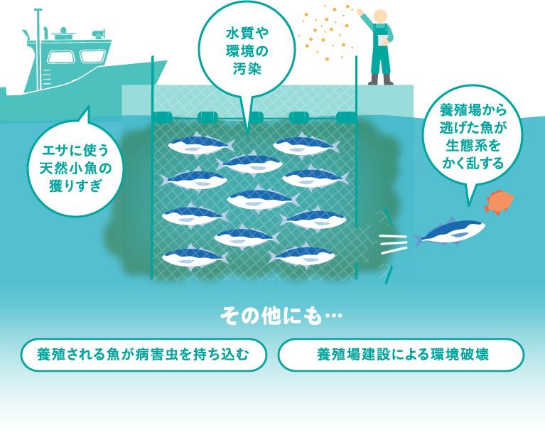 エサに使う天然小魚の獲りすぎ・水質や環境の汚染・養殖場から逃げた魚が生態系をかく乱する その他にも… 養殖される魚が病害虫を持ち込む・養殖場建設による環境破壊