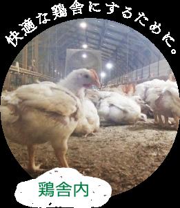 鶏舎内 快適な鶏舎にするために。