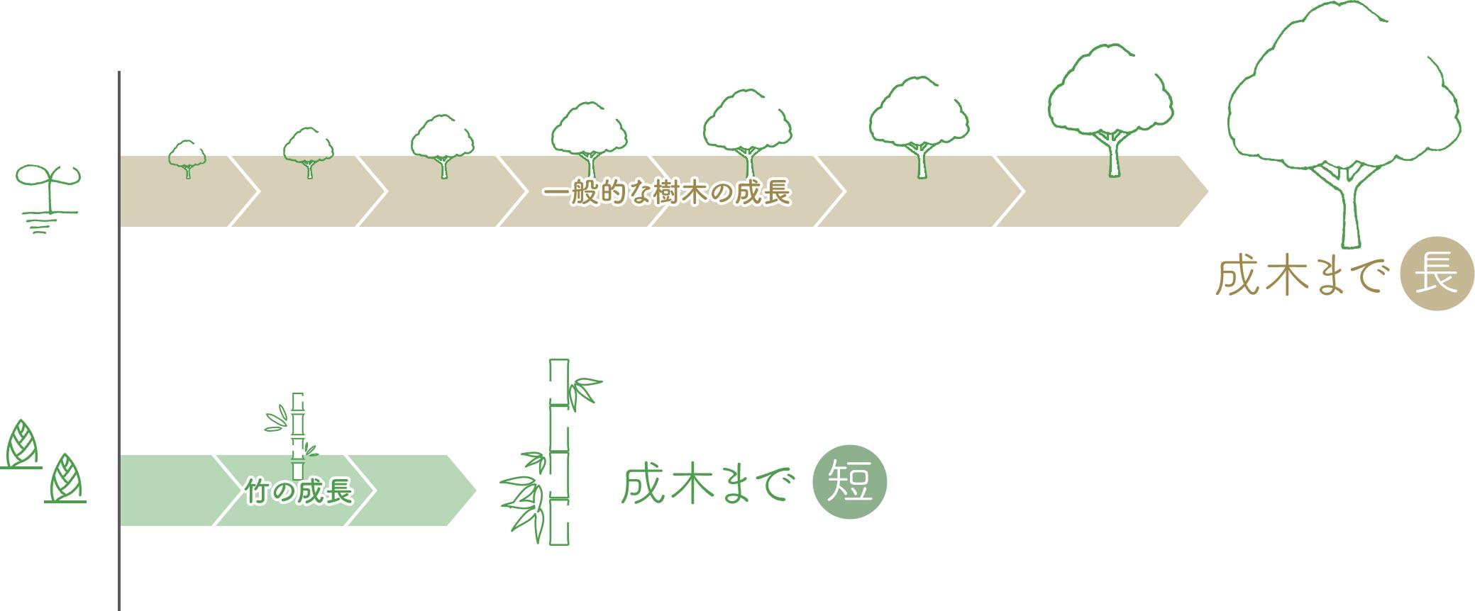 一般的な樹木と竹の成長の比較