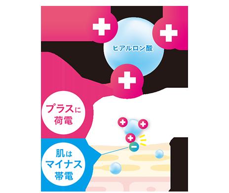 ヒアルロン酸プラスに荷電肌はマイナス帯電表皮