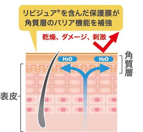 乾燥、ダメージ、刺激 角質層 表皮 リピジュア®を含んだ保護膜が角質層のバリア機能を補強 乾燥、ダメージ、刺激 表皮 角質層