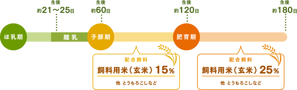 子豚期 飼料用米(玄米) 15%  肥育期 飼料用米(玄米) 25%