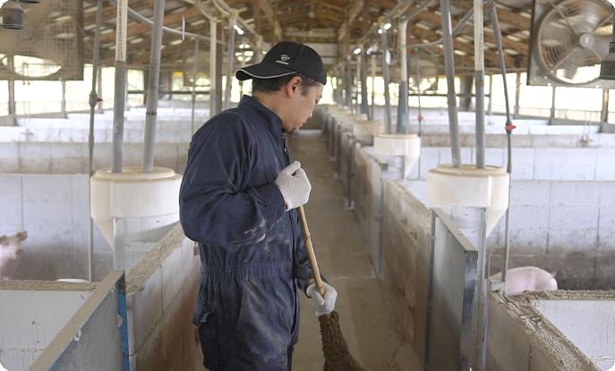 """安全でおいしい豚肉をお届けするためには""""家畜を大切に育てる""""という動物福祉の考えが必要不可欠となる。雪国牧場では、こだわりの飼料を与え、豚や豚舎、飼育員の衛生管理を徹底するなど、ストレス、怪我等を極力減らし、豚が健康でいられる環境を作っている。"""