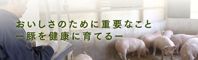 おいしさのために重要なことー豚を健康に育てるー