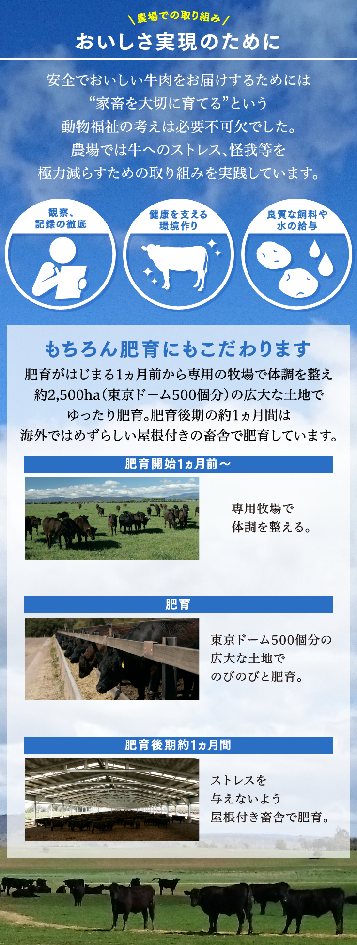 """農場での取り組みおいしさ実現のために安全でおいしい牛肉をお届けするためには""""家畜を大切に育てる""""という動物福祉の考えは必要不可欠でした。農場では牛へのストレス、怪我等を極力減らすための取り組みを実践しています。観察、記録の徹底健康を支える環境作り良質な飼料や水の給与もちろん肥育にもこだわります肥育がはじまる1か月前から専用の牧場で体調を整え約2,500ha(東京ドーム500個分)の広大な土地でゆったり肥育。肥育後期の約1ヵ月間は海外ではめずらしい屋根付きの畜舎で肥育しています。肥育開始1ヵ月前~専用牧場で体調を整える。肥育東京ドーム500個分の広大な土地でのびのびと肥育。肥育後期約1ヵ月間ストレスを与えないよう屋根付き畜舎で肥育。"""