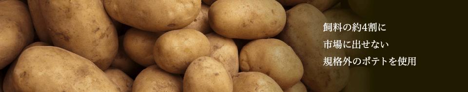 飼料の約4割に市場に出せない規格外のポテトを使用