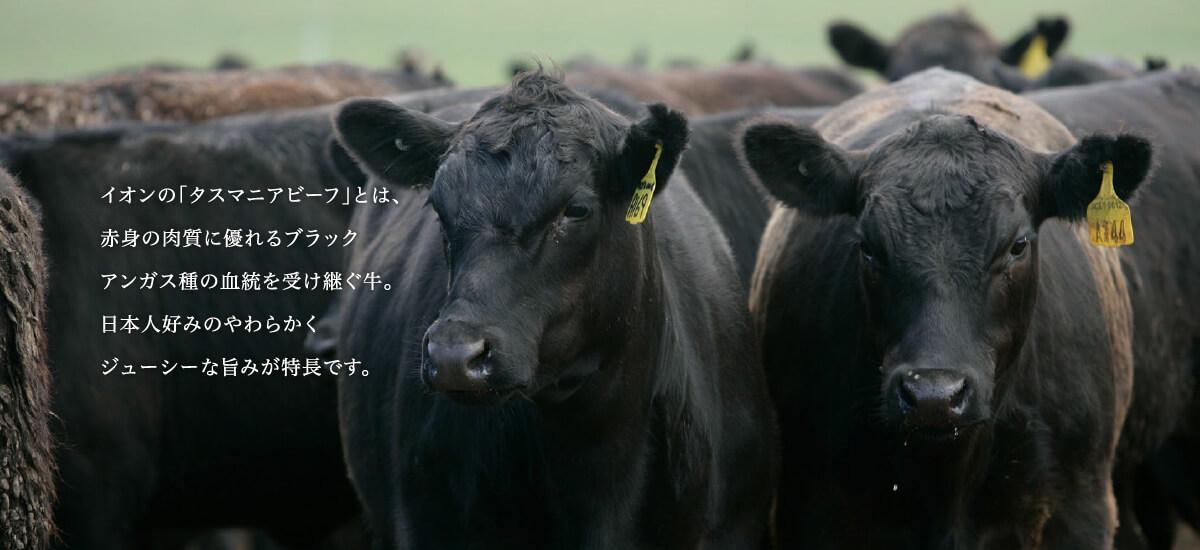 イオンの「タスマニアビーフ」とは、赤身の肉質に優れるブラックアンガス種の血統を受け継ぐ牛。日本人好みのやわらかくジューシーな旨みが特長です。