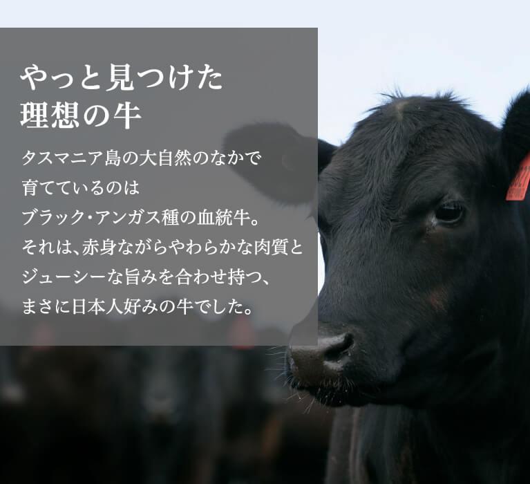 やっと見つけた理想の牛タスマニア島の大自然のなかで育てているのはブラック・アンガス種の血統牛。それは、赤身ながらやわらかな肉質とジューシーな旨みを合わせ持つ、まさに日本人好みの牛でした。