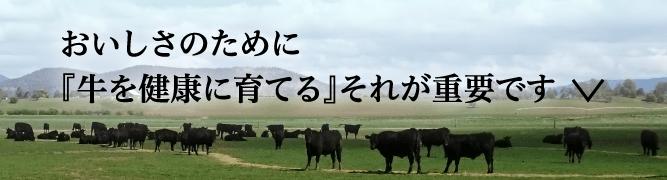 おいしさのために『牛を健康に育てる』それが重要です