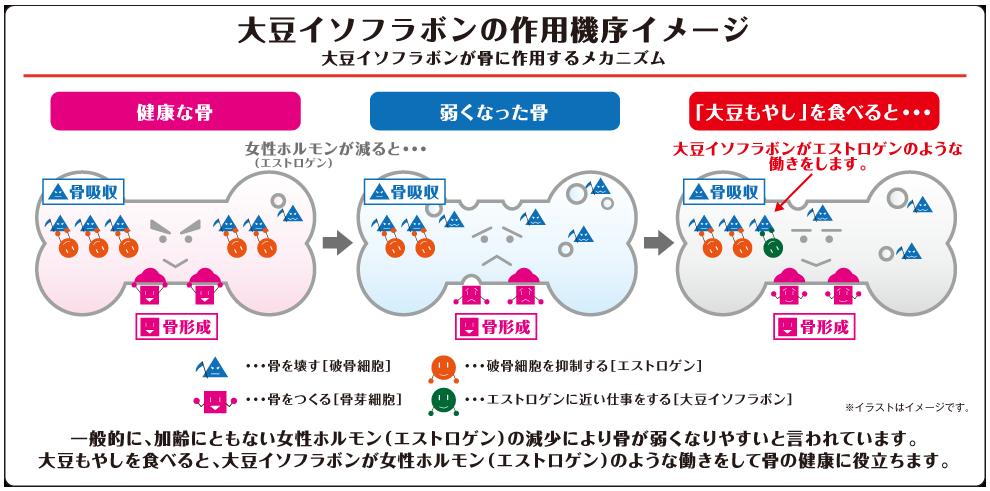 大豆イソフラボンの作用機序イメージ