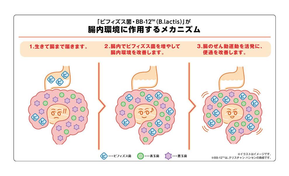 ビフィズス菌BB-12(B.lactis)が腸内環境に作用するメカニズム