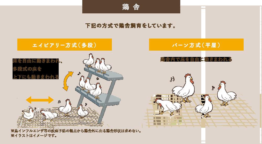 鶏舎 - 下記の方式で鶏舎飼育をしています。エイビアリー方式(多段)床を自由に動きまわれ、多段式の床を上下にも動きまわれる バーン方式(平屋)鶏舎内で床を自由に動きまわれる